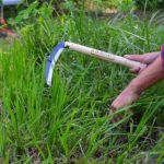 How to Cut Grass Without a Weed Eater