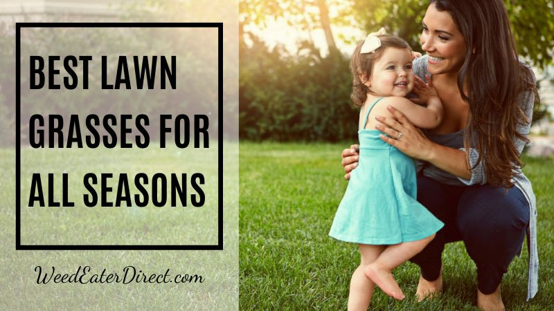 Best Lawn Grasses for Cool and Warm Seasons