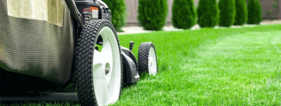 Should you establish a lawn care business