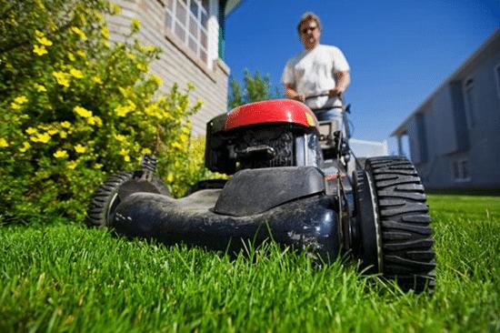 Should you establish a lawn care business